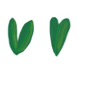 ハート型オリーブの葉っぱ
